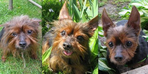 救助された犬や猫01