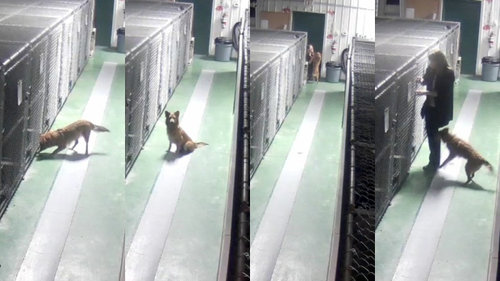 「ペットホテルから犬が脱走した理由」04