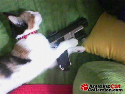 デンジャラス猫&犬01