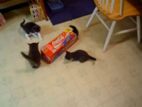 箱と子猫の戦い01