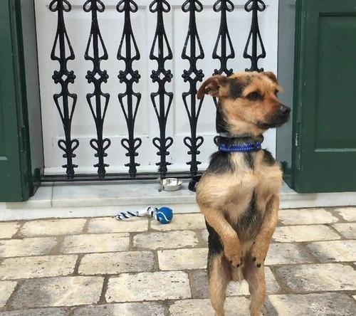 飼い主を待つ犬たち09