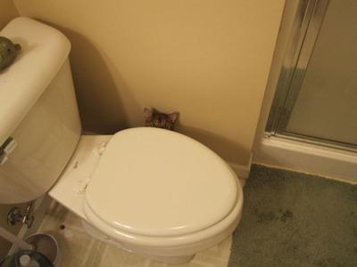 潜む猫05
