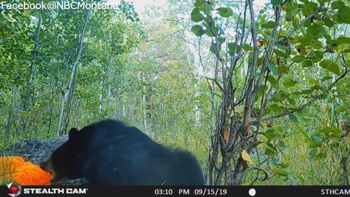 テディベアと遊ぶ野生のクマ03