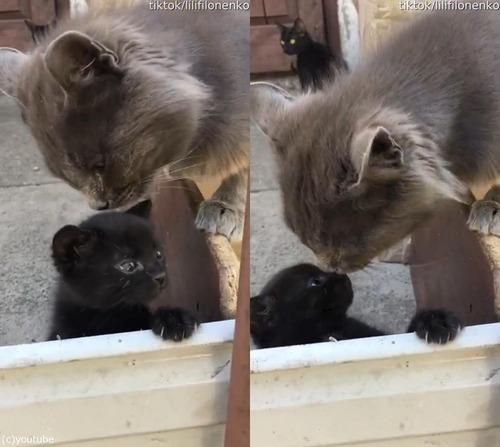 子猫のパパ、ママに叱られる00