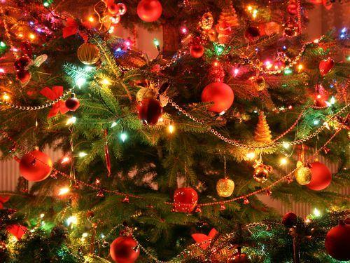 クリスマスと猫00