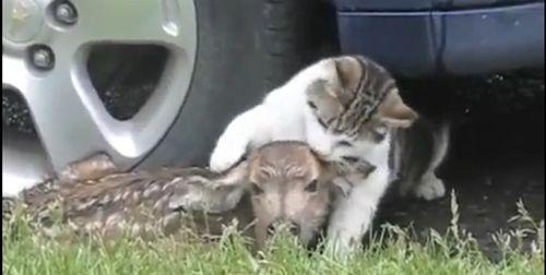 鹿と猫09