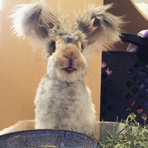 翼のような耳を持つウサギ02