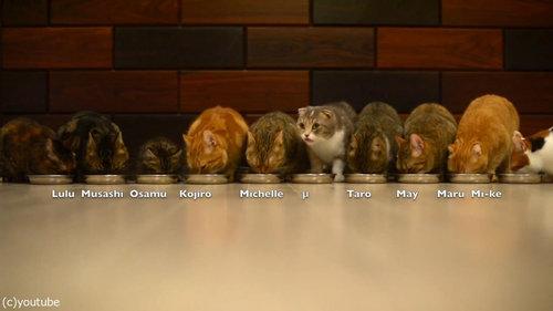 猫10匹が並んで食事02