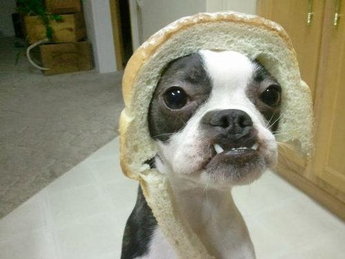 犬とパンの耳02