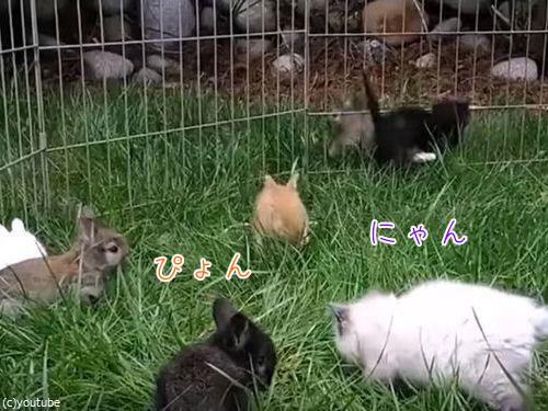子猫と子ウサギ00