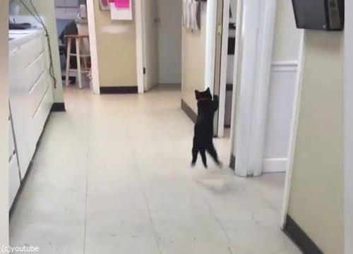 ピンポン猫06