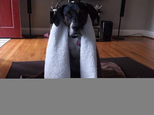 犬と一緒にバックパッカー01
