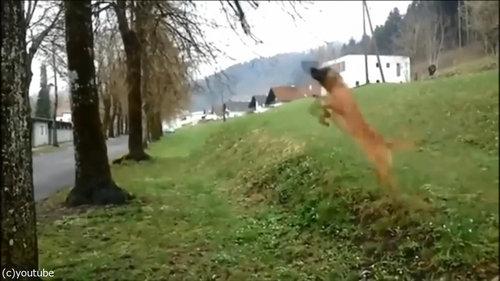 犬のダイナミックなひとり遊び01