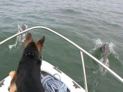 イルカと犬
