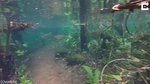 水没した森の中を散歩してみた03