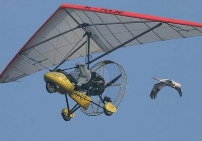 ハングライダーと鳥
