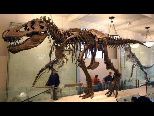 ティラノサウルスの腕の長さ00