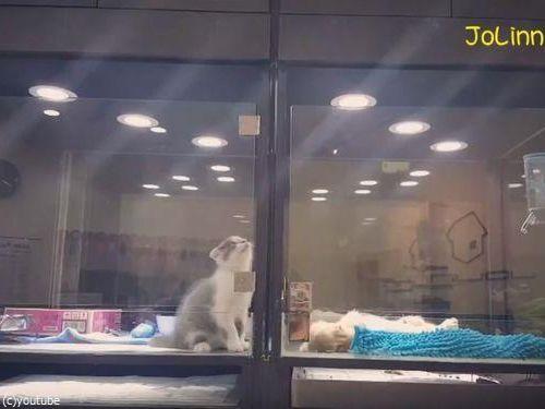 隣の犬に会いに行く猫08