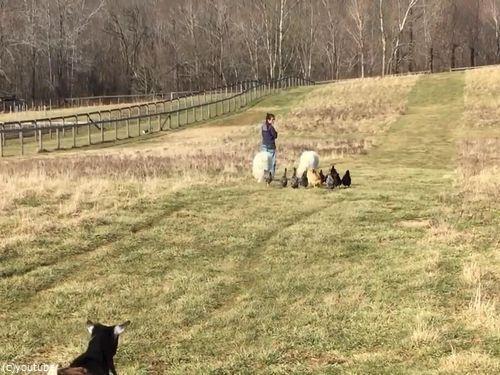 農場で動物と散歩05