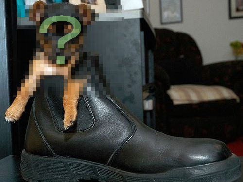 靴の中の犬00