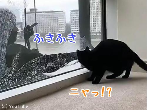 猫と窓掃除人が出会ったら00