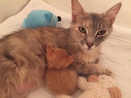 子を亡くした母猫と親を亡くした子猫02