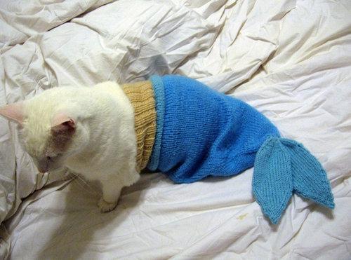 人魚猫01