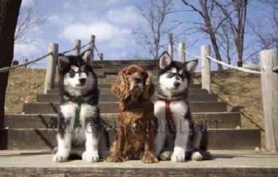 3匹の犬の成長03