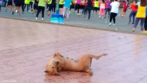 この犬、人間と一緒に踊ってる…03
