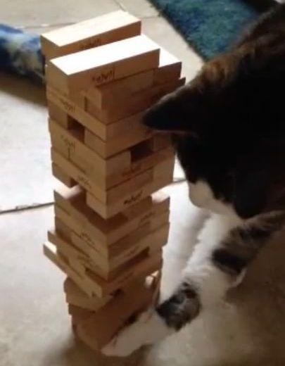 猫とジェンガ01