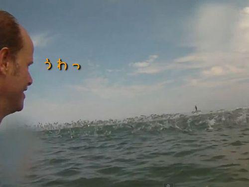 海水浴に大量の魚が飛び跳ねる
