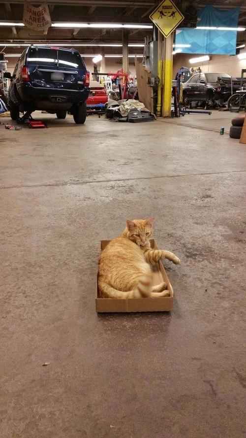 猫とトラップ01