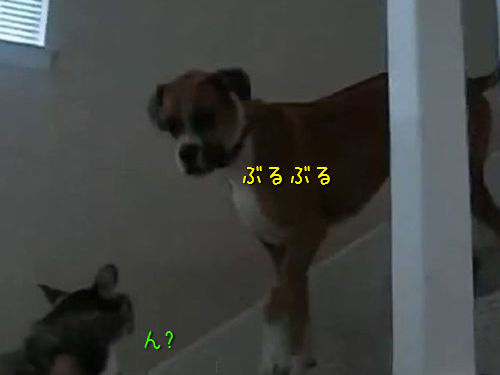 猫が怖い犬00