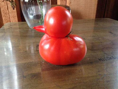 07変わった形の野菜・果物