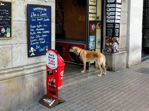 飼い主を待つ犬たち04