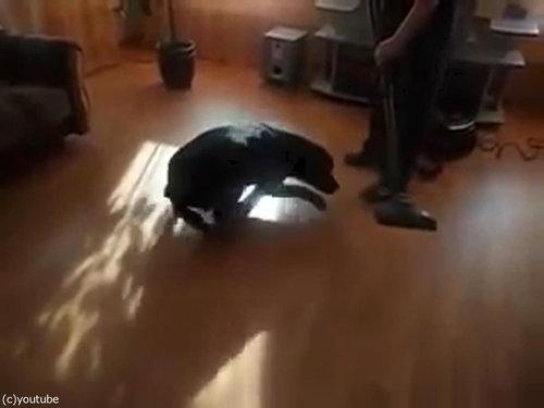 掃除機ラブな犬02