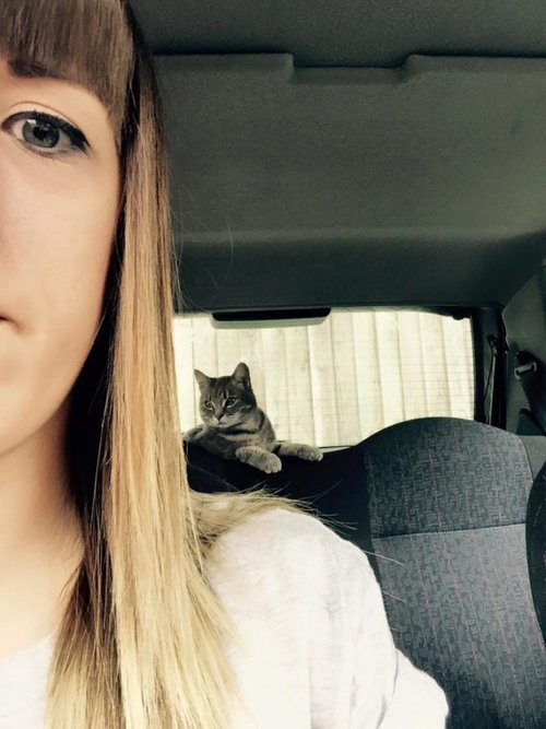 帰宅したら…見知らぬ猫がいる09
