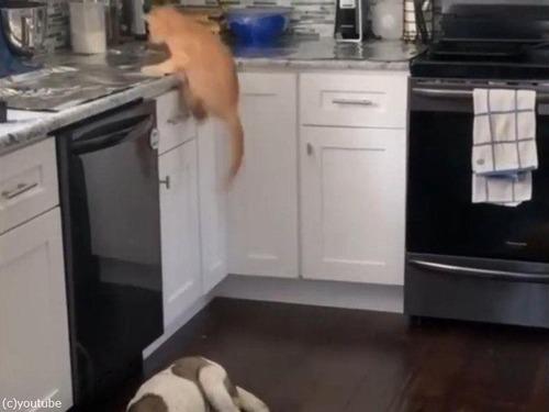 「猫がキッチンカウンターの上に乗らないようにする方法」02