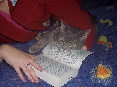 とても賢そうなインテリ猫たち07