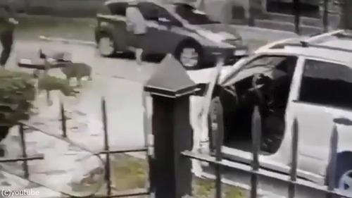 ボクサー犬、飼い主さんを襲った強盗を撃退04