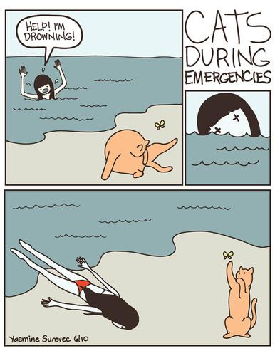 緊急時のネコの態度01