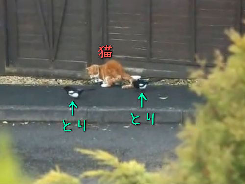 猫とカササギ00
