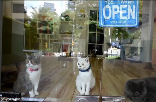 猫のための5つ星ホテル06