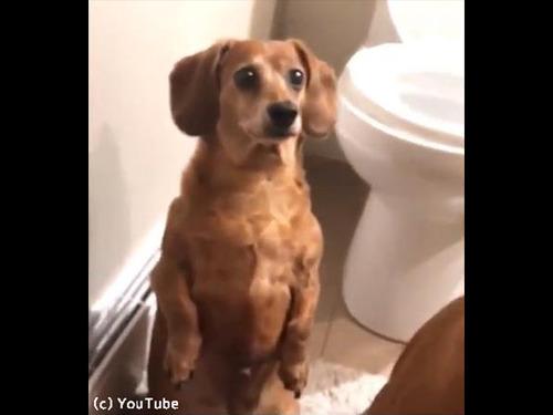 入浴中の飼い主さんをじっと見つめるワンコたち00