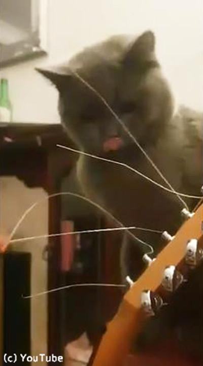 ギターの弦が気になる猫01
