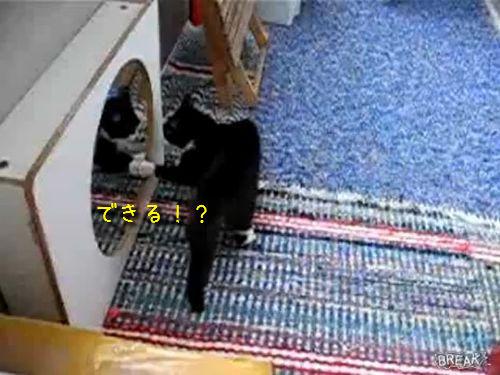 鏡と戦う猫