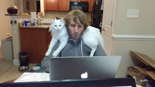 猫はパソコンに乗りたがる01