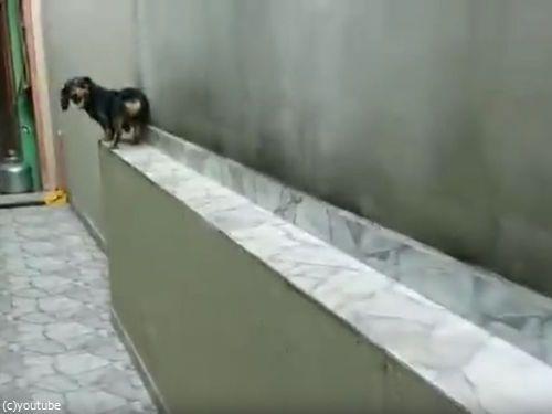 「この犬がどうやって窮地を脱出するかわかる?」03