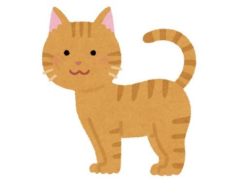 「あなたの猫を1枚の写真で表現しなさい」00