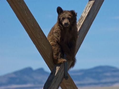 クマが登った00